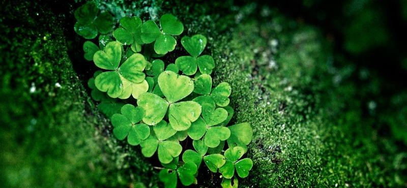 Quando il Santo sbarcò in Irlanda, gli Irlandesi combatterono le sue  dottrine, non riuscendo a comprendere soprattutto il mistero della Trinità,