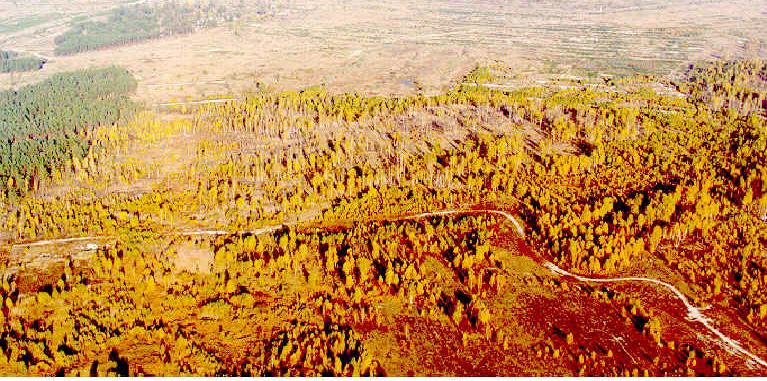 Disastri nucleari: a chernobyl gli alberi non si decompongono
