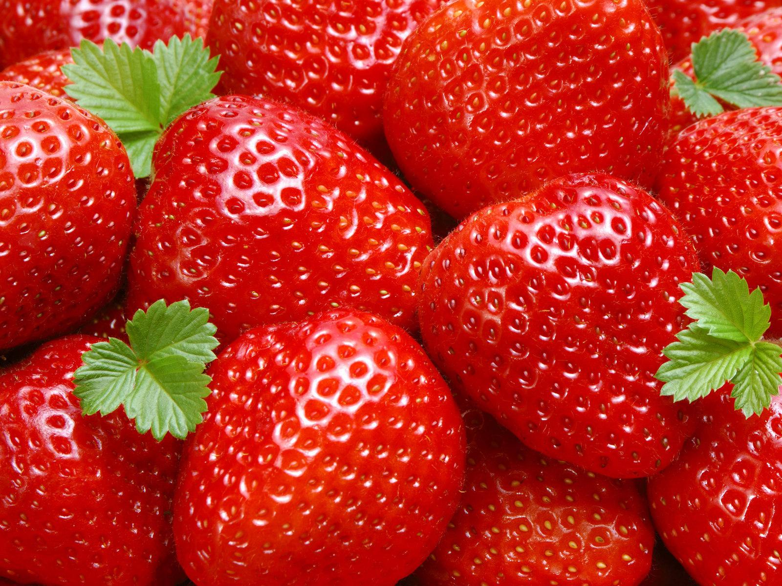 U Pick Strawberries Vero Beach Fl
