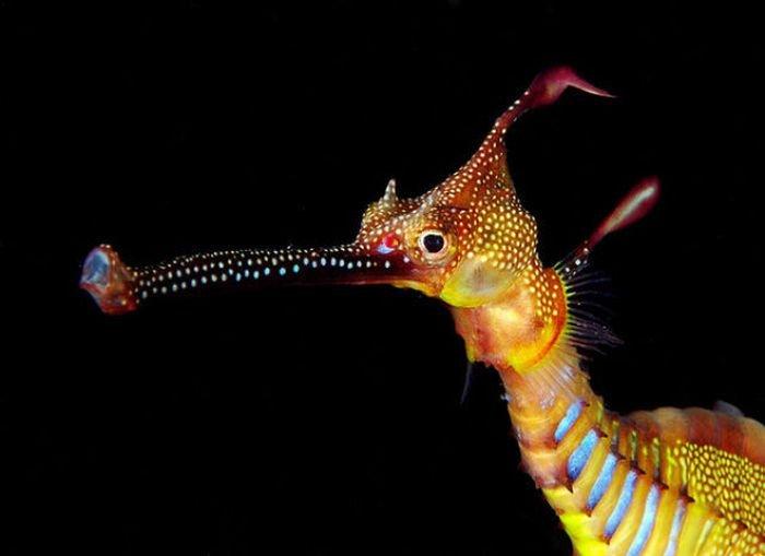 la leggendaria vita marina del dragone foglia uno dei