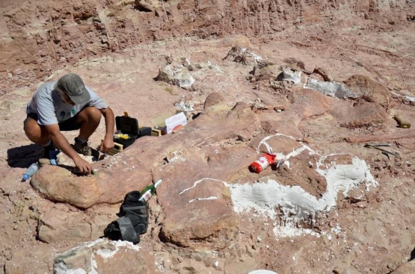 In patagonia i resti fossilizzati dei dinosauri pi grandi for 1 1 2 piani di cottage storia