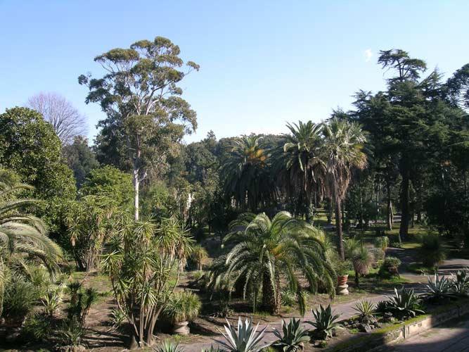 Maltempo firenze: ingenti danni allorto botanico. riaperto il