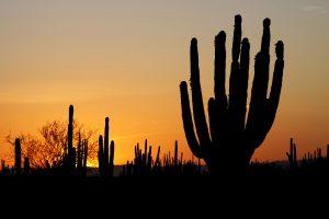 Il paesaggio dell'arido deserto del Sonora osservato al tramonto