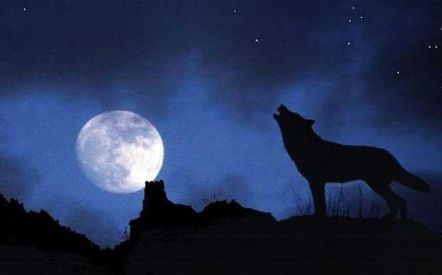 image Gli animali al buio si calmanole porche si eccitano