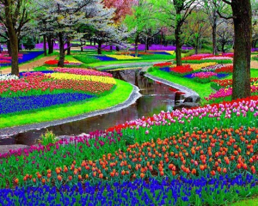 Keukenhof, Olanda: l'incommensurabile bellezza del parco floreale più famoso del mondo