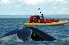 Balene a Tadoussac