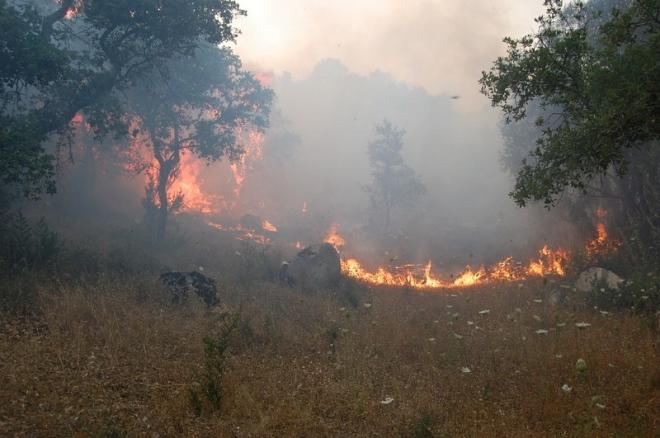 Incendi, roghi in tutta la Sicilia$