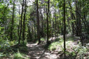 seveso_parco-spina-verde (7)