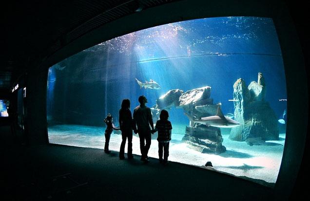 l 39 acquario di genova lancia iniziative speciali per