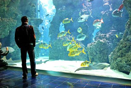 L 39 acquario di genova lancia iniziative speciali per for Acquario per tartarughe grandi