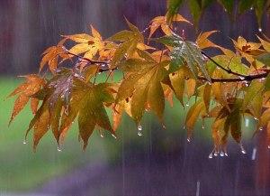 pioggia autunno01