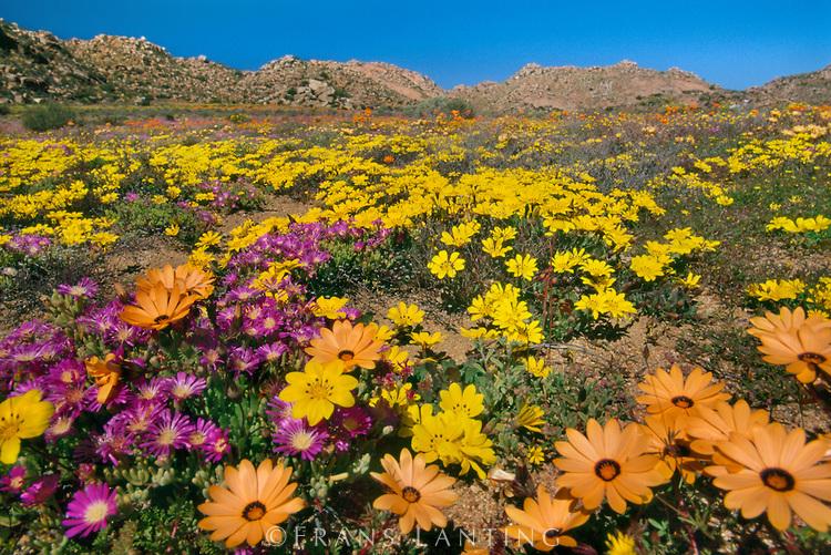 Namaqualand il meraviglioso deserto fiorito del sudafrica for Sud africa immagini