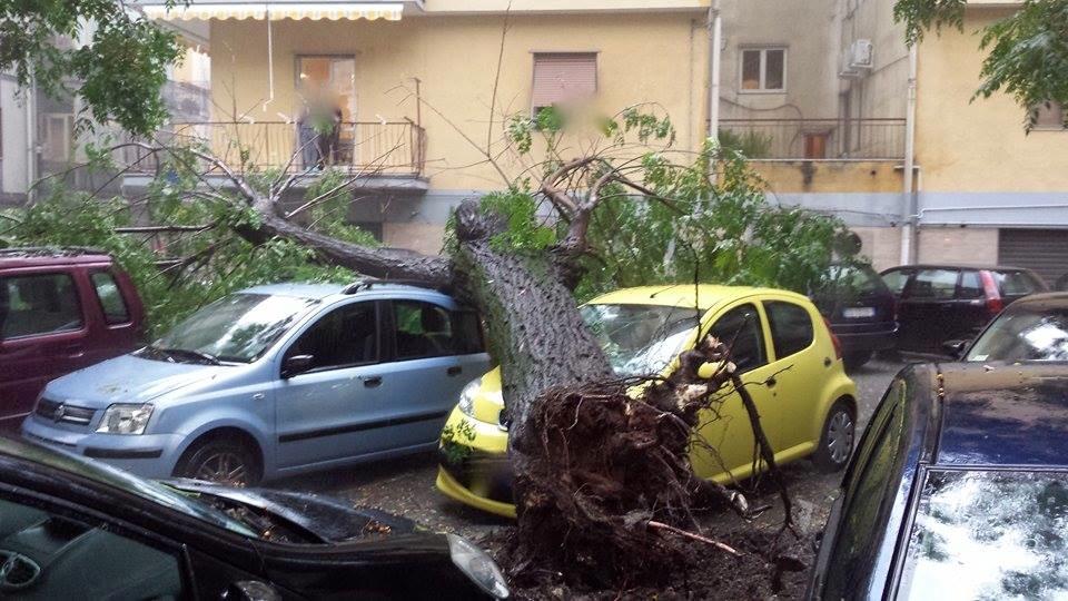 albero-auto-uccisa.jpg (960×540)