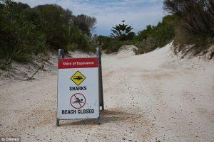 attacco squalo australia (8)