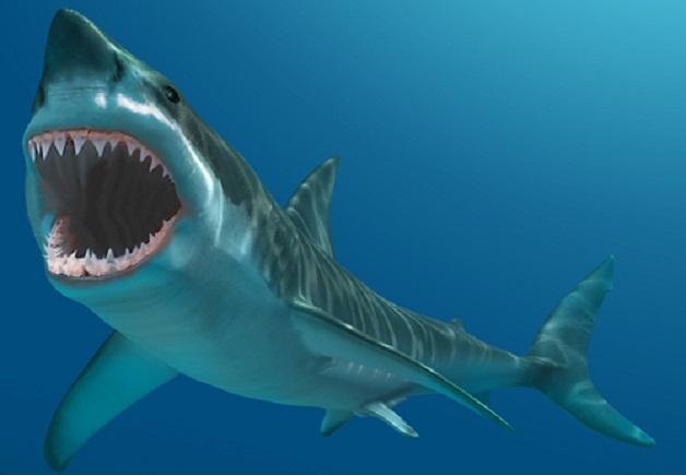 Pin squalo disegno disegni da colorare imagixs on pinterest for Squalo bianco da colorare