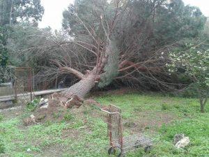 uragano gonzalo sardegna 02 (2)
