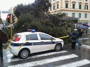 crollo alberone roma