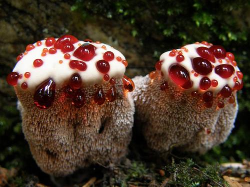 Che il fungo di unghie piaceri di aceto di rimedi di gente fissi