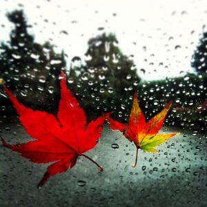 Autunno perché le foglie diventano gialle e cambiano colore