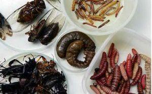cena insetti