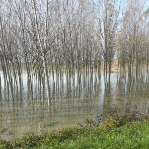 fiume po piena (7)