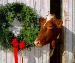 mucca natale