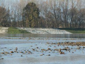 piena fiume po (3)