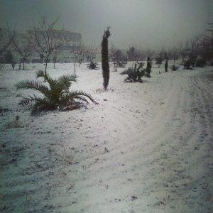 algeria neve (6)