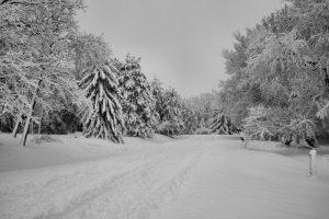 snow storm_9230