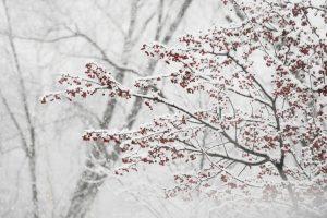 snowstorm neve freddo