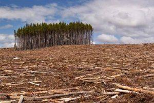 Deforestazione illegale-anteprima-600x404-775256
