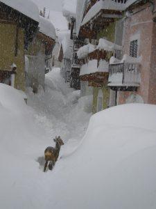 neve cervo