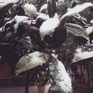 neve cosenza8