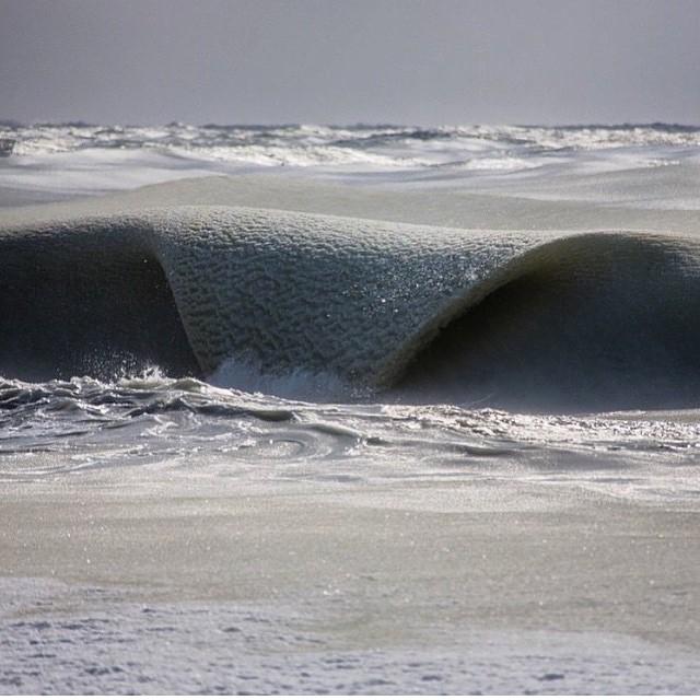 Incredibile a nantucket il gelo record degli usa - Foto di animali dell oceano ...