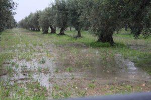 maltempo sicilia (6)
