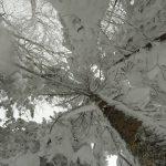 Neve Record Marzo 2015 Capracotta Agnone Pescocostanzo (23)