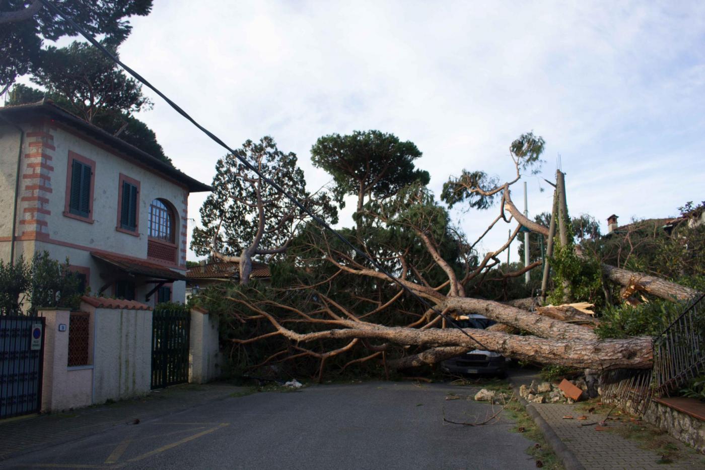 Sradicamenti un 39 opera d 39 arte con gli alberi abbattuti dal maltempo - Il giardino forte dei marmi ...