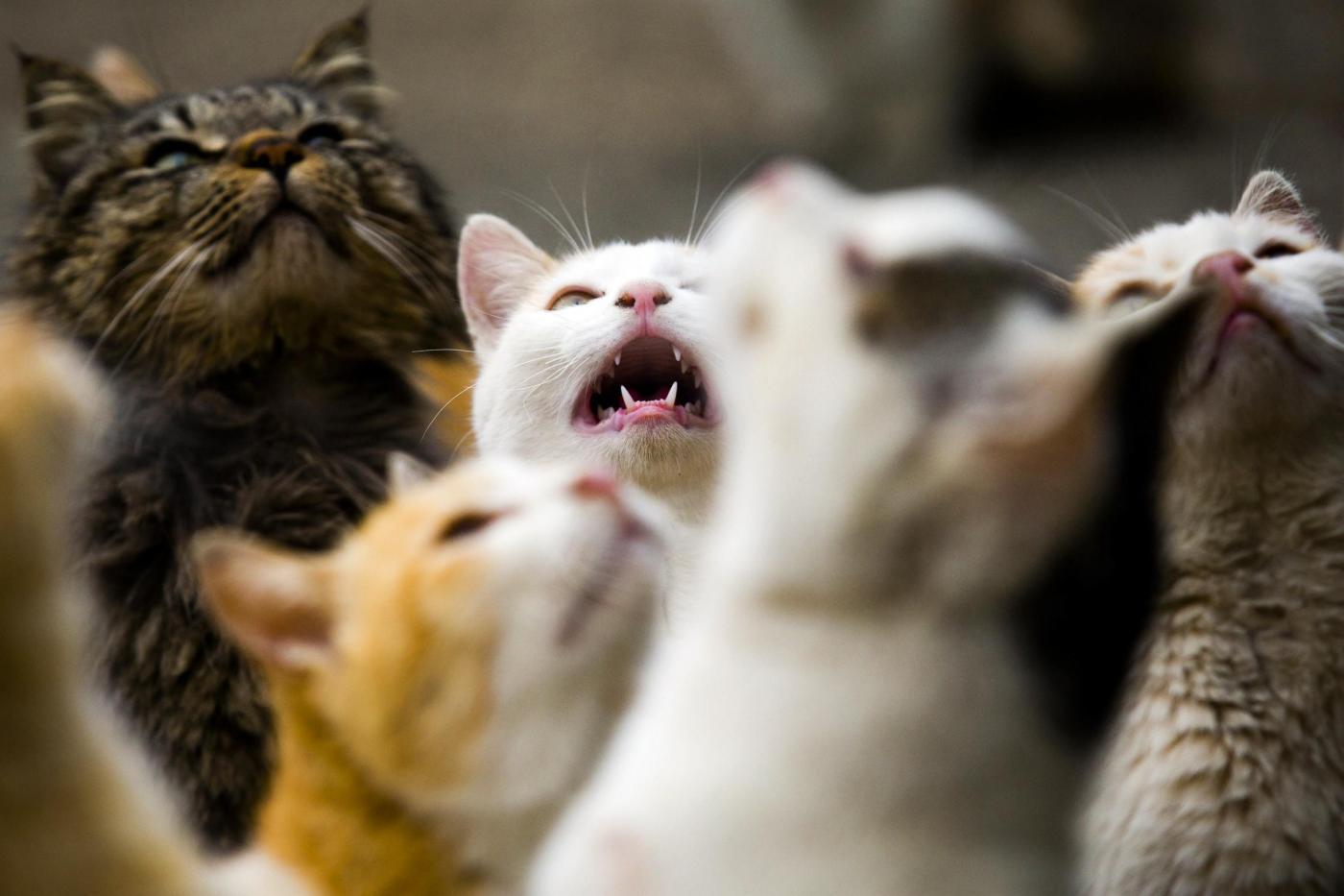 Pronto lo sterminio dei gatti: ecco perché