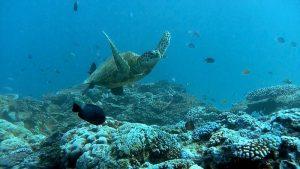 Video Screen Grabs from Great Barrier Reef Clipreel