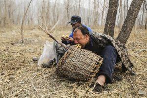 In Cina un uomo cieco con un amico senza braccia trasformano un deserto in una foresta