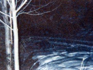 fascicolo forestale 01