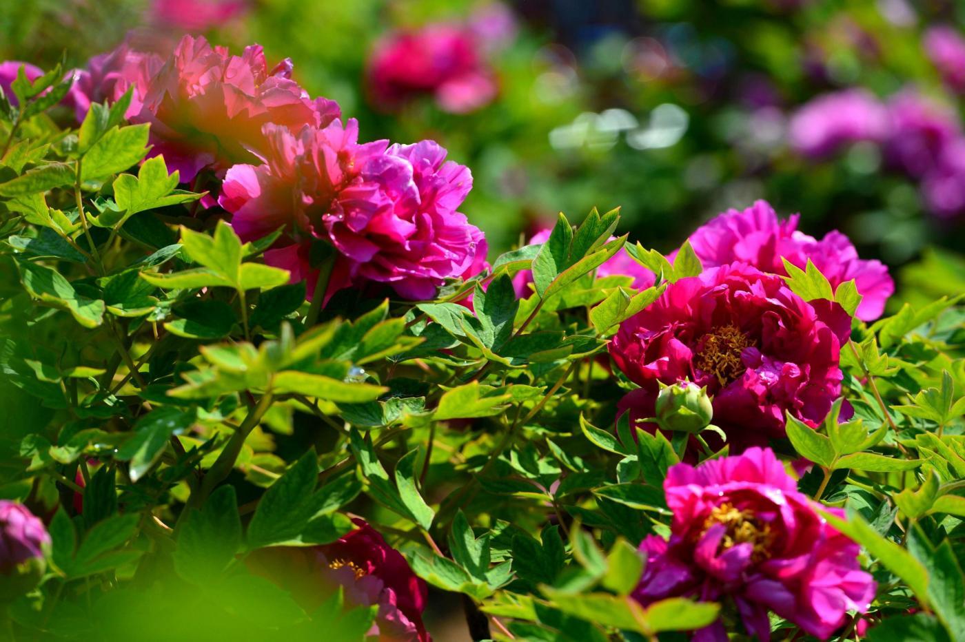 Cina fiori nel giardino botanico di jinan foto - Fiori di giardino ...