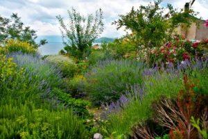 giardino-mediterraneo