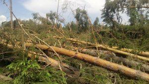 """Ecco ciò che resta della foresta di conifere distrutta dal passaggio di un probabile """"microburst"""" nella regione di Nižnij Novgorod"""