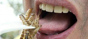 mangiare insetti o Herbalife