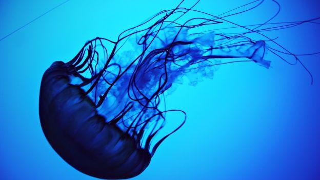 Ambiente sempre meno pesci in mare aumentano meduse e for Immagini da colorare di pesci