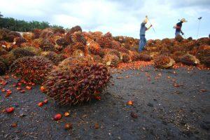 olio_palma_produzione_mondiale