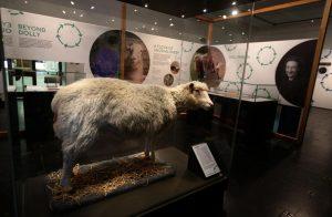 La pecora Dolly in mostra presso l'Universit Main Library Exhibition Gallery. di Edimburgo.