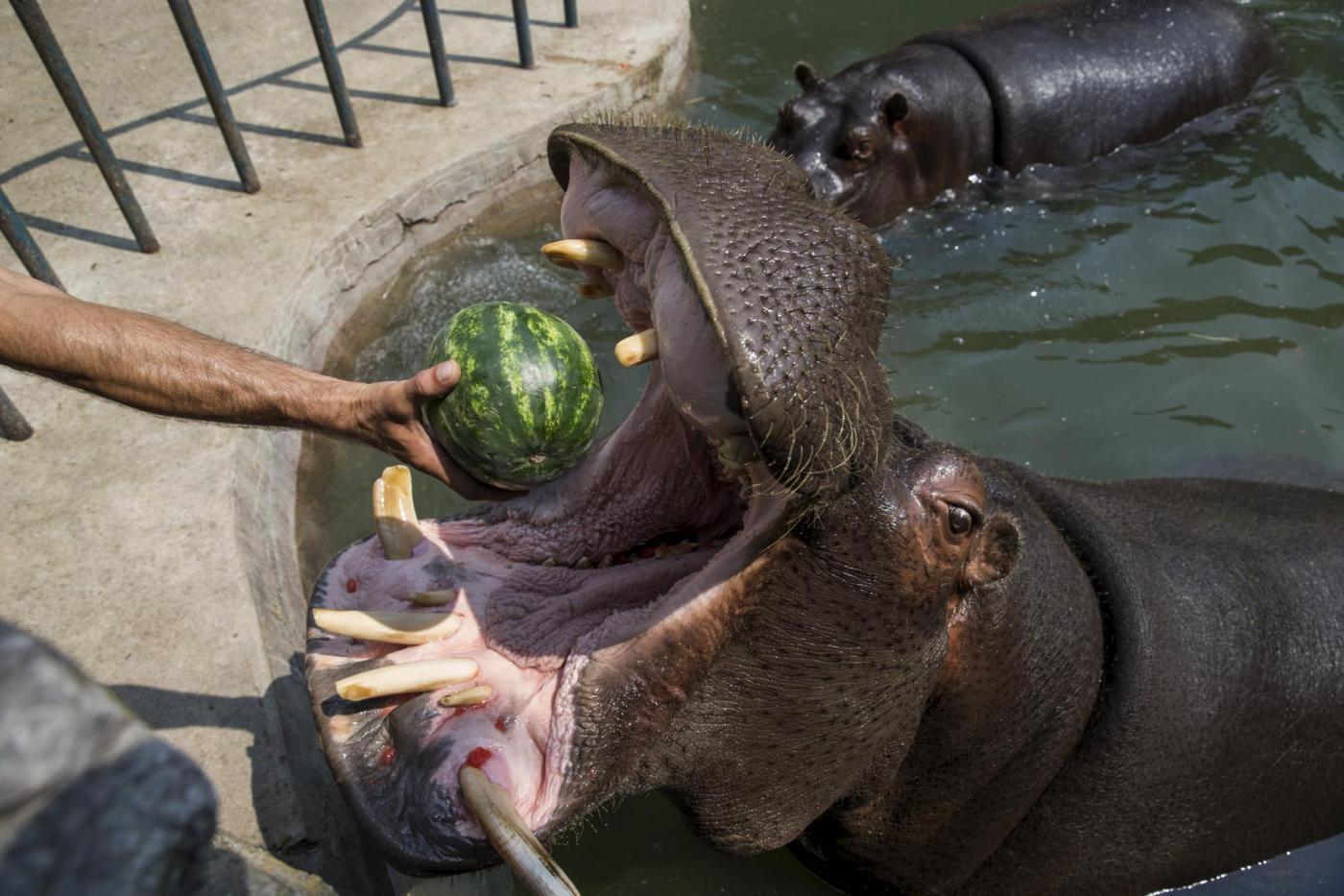 Belgrado rimedi contro il caldo per gli animali dello zoo