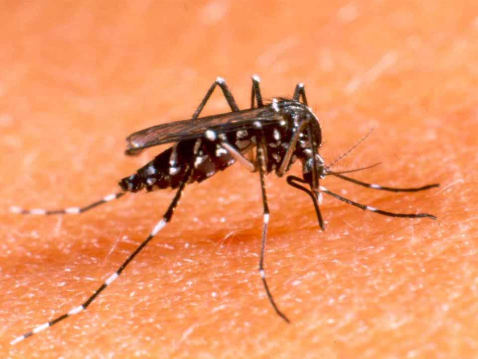 L'Aquila: primo caso di dengue del 2016, paziente già dimesso